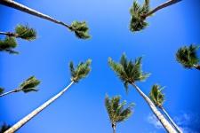 Le ciel, guide des Polynésiens