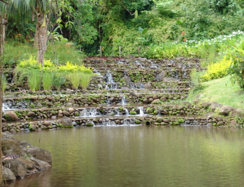 The Gardens of Tahiti