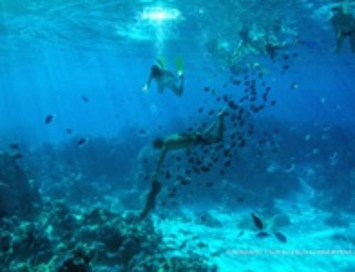 """NEW in Bora Bora! Excursion """"Bora Bora Experience"""""""