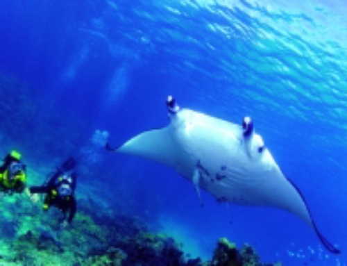 Useful Reminders about Scuba Diving