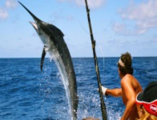 Partant pour une partie de Pêche… au Gros ?