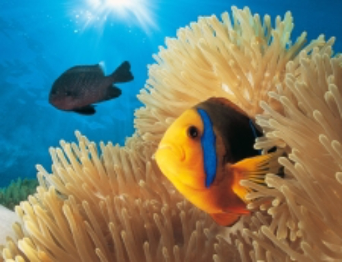 Nouveau à Moorea ! Excursion Bateau Fond de Verre & Snorkeling 3h00