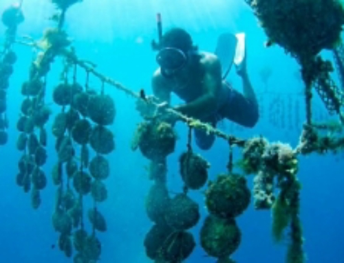 New in Bora Bora! Dive for your own Black Pearl