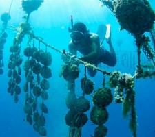 New in Bora Bora! Dive for your own Black Pearl
