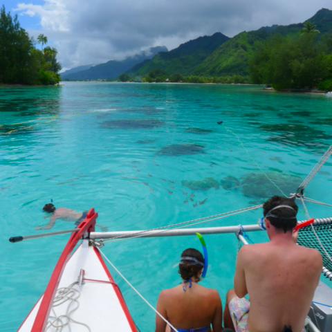 Arrêt snorkeling pour rencontre avec les raies et requins à Moorea - Le Taboo