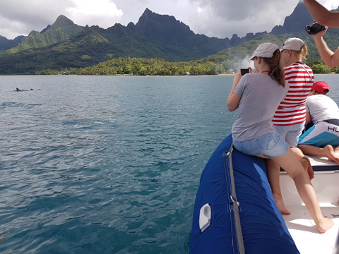 Meeting with the spinner dolphins in Moorea