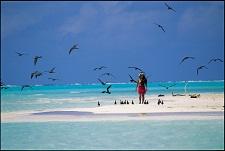 L'île aux oiseaux Tetiaroa