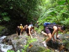 Randonnée du Mont Temehani à Raiatea