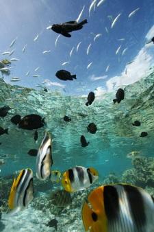 A rich marine life