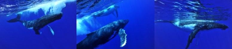 Majestic cetaceans