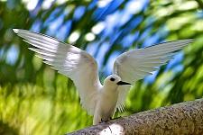 En harmonie avec la nature