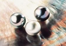 Les perles de Tahiti