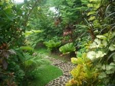 Un jardin verdoyant