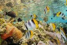 TAH Diving