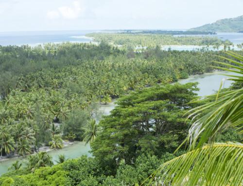 Cap sur Huahine, jardin d'Eden du Pacifique sud