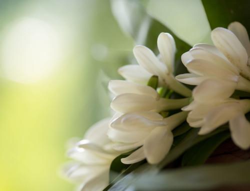 Les fleurs en fête lors des Floralies de Tahiti