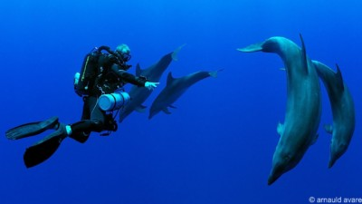 Scuba diver diving with dolhpins in Rangiroa and equipped with a rebreather system