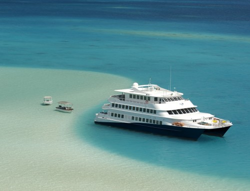 New! Haumana Cruises