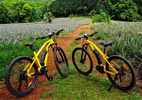 Vélos électriques dans les champs d'ananas